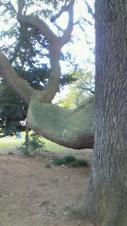 スゴ腕の杉
