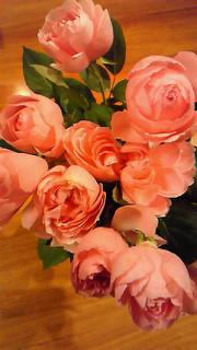 下町よみせ通りの薔薇