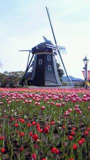 オランダ趣味