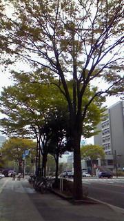 青葉の風薫る仙台