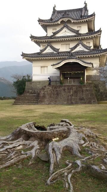 宇和島城と巨木の切り株