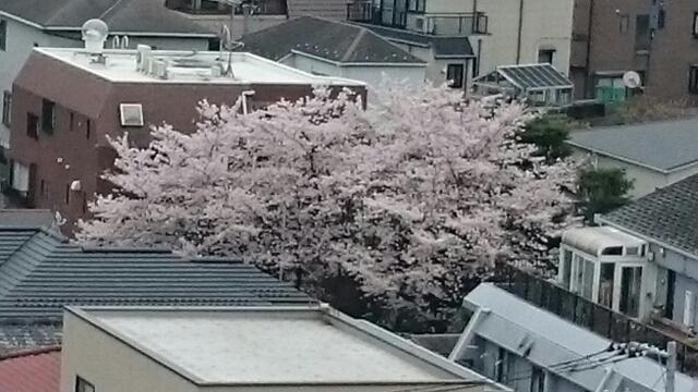 千駄木の花束