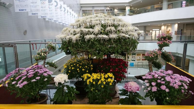 菊の季節ですね。