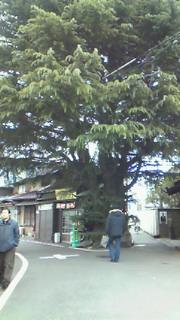 日曜散歩@谷中