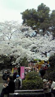 上野花見散歩