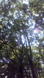 360℃ブナ原生林