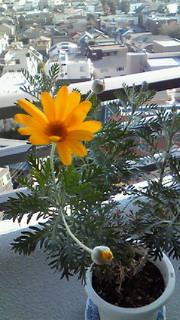 一年ぶりに咲きました。