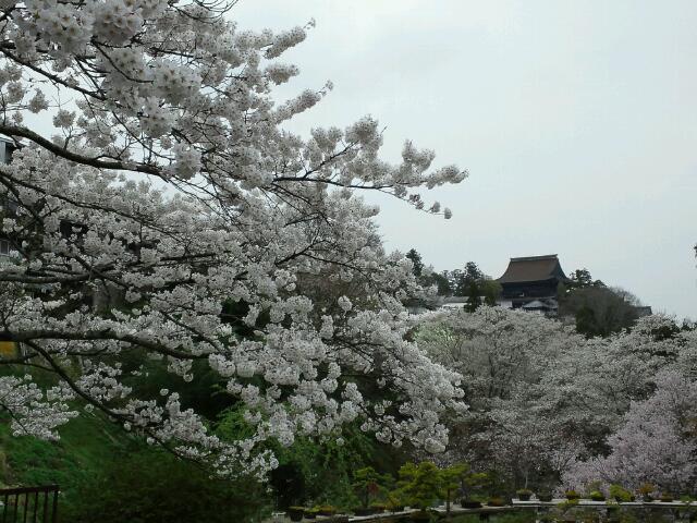 桜に煙る金峯山寺