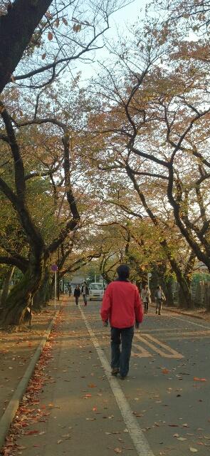 葉っぱの道