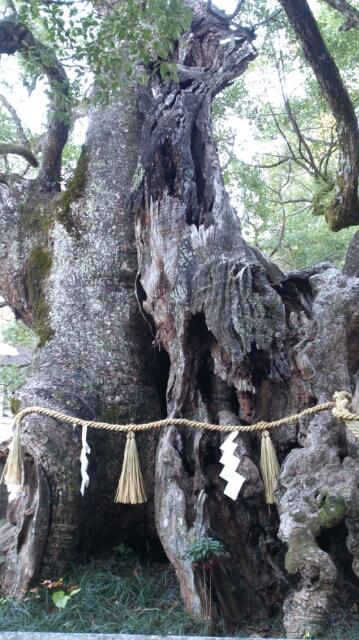 大山積神社の守り神