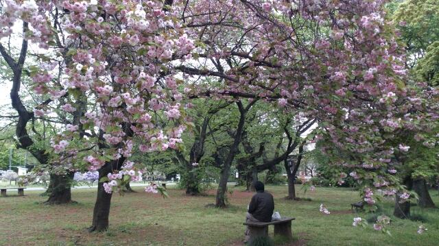 八重桜の下でおやつ