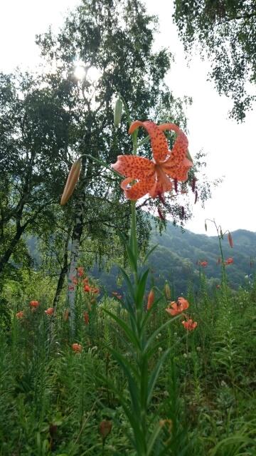 湯沢の高原で